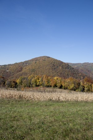 Landscape view in Croatia(Zagorje), forest in the autumn Stock Photo