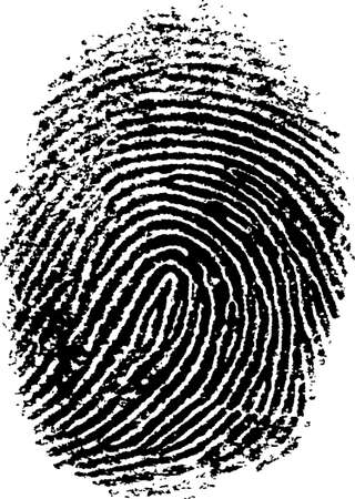 Black and White Vector Fingerprint - Very accurately scanned and traced ( Vector is transparent so it can be overlaid on other images, vectors etc.) Illustration
