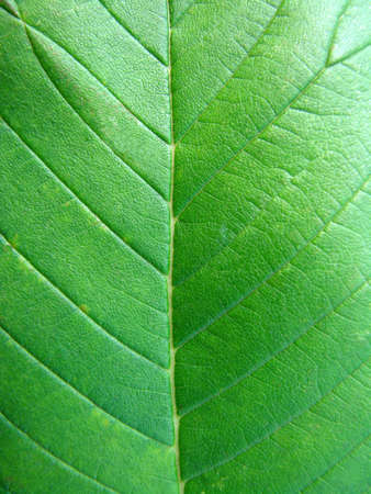 Close-up on a Green Leaf