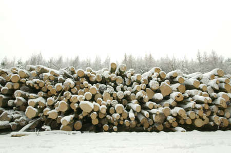 Log pile in the forest covered in snow photo