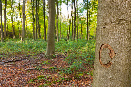 felling: The recycle symbol carved into a tree in managed woodland. This tree was marked to be cut down as part of a forestry clearing project.