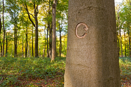 forest management: The recycle symbol carved into a tree in managed woodland. This tree was marked to be cut down as part of a forestry clearing project.