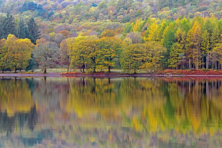 autumn colour: Trees ablaze with Autumn colour reflected in the calm surface of Coniston Water in the Lake District.
