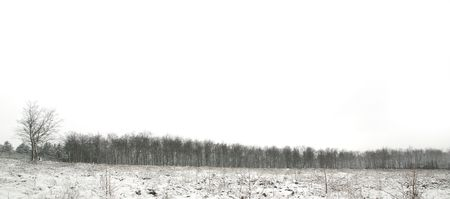 snowscene: Snow scene panorama of a forest tree line with an area of new planting in front