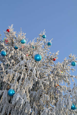 The Christmas tree in hoarfrost on the sky background Stock Photo - 2523502
