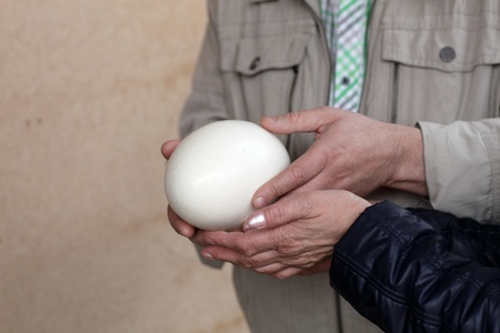 tremendous: People with ostrich egg on a farm Stock Photo