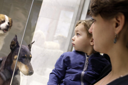 zoological: Family looking at dogs in zoological museum