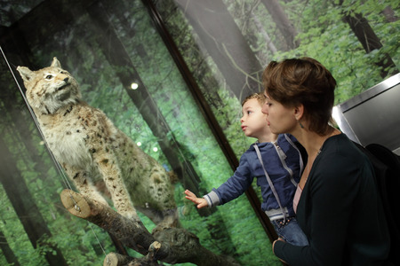 zoological: Family looking at tiger in zoological museum