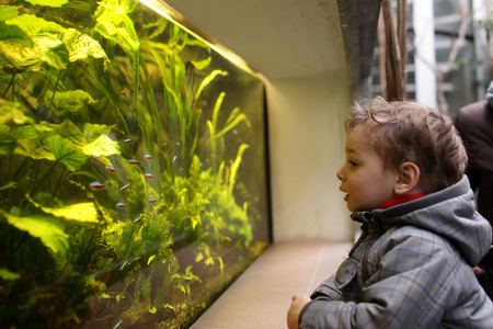 The child watching fishes in an aquarium photo