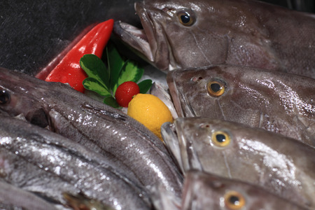Heads of the fresh bluefishes at a market photo