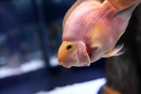 View of the parrot fish in the oceanarium photo