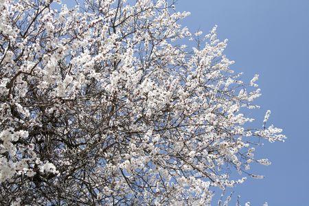 spring  tajikistan: La fioritura della primavera la stagione in Tagikistan