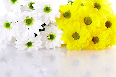 flower background photo