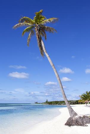 onbewoond: De eenzame palmboom leunt over het strand van onbewoonde Little Stirrup Cay eiland de Bahamas Stockfoto