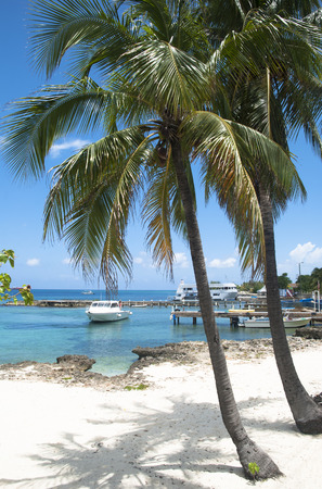 cayman: Palms leaving shadows in George Town beach on Grand Cayman island (Cayman Islands).