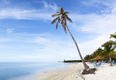 uninhabited: The leaning palm  that felt down weeks later  on Little Stirrup Cay uninhabited island beach  The Bahamas   Stock Photo