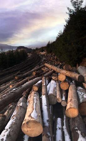 destroying: Lumber Stock Photo