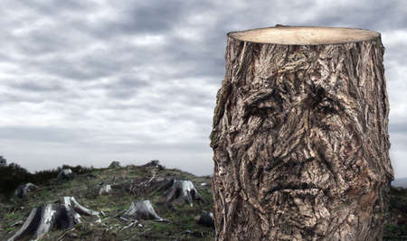 face in tree bark: Dying woods