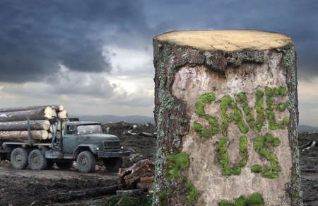 deforestation: Save the trees Stock Photo