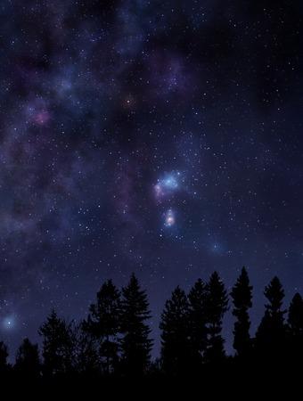 estrella: Escena de la noche con el bosque y el cielo estrellado sobre
