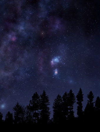 sfondo giungla: Scena di notte con la foresta e cielo stellato sopra