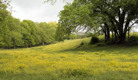 Rolling hills with trees and valleys. Wild flowers blooming across the bottom.