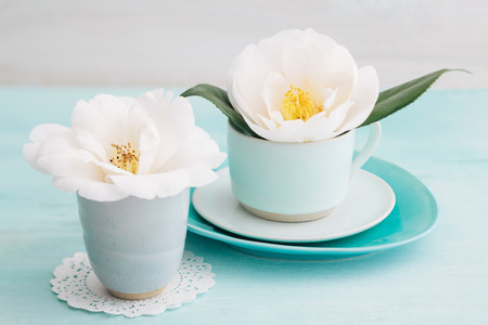 camellia: Camellia flower blossoms in turquoise cups Stock Photo