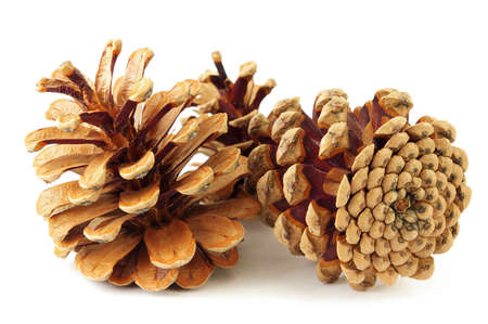Pine cone isolated on white. photo