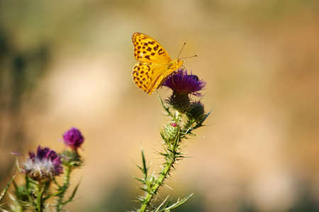 Butterfly on a flower. Stock Photo - 1558090