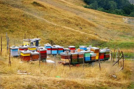 bellow: Este colmenas est�n situadas en el valle abajo Bjelasica Monta�a, Montenegro.