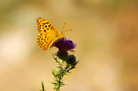 Butterfly on a flower Stock Photo - 2622323