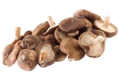 Shiitake champignons Stockfoto