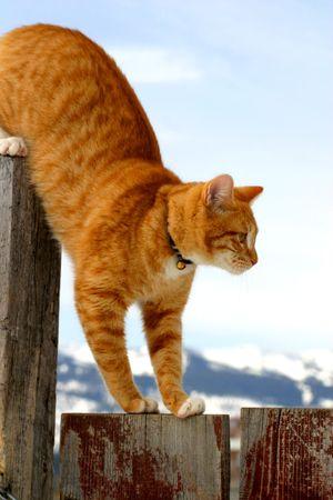 stalking: Cat Stalking