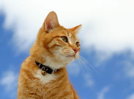flink: Katze-Schauen