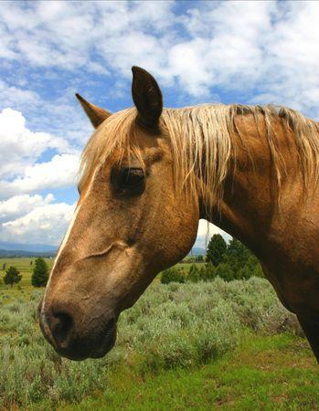 durable: Portrait Of A Horse