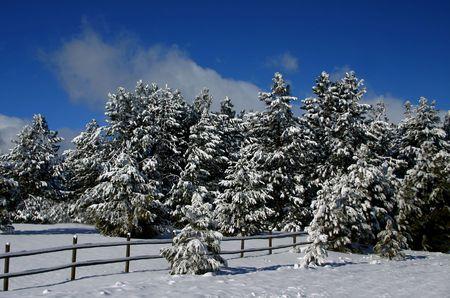 fenceline: Idaho Winter Stock Photo