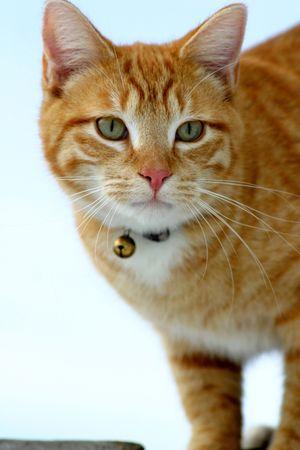 flink: Katze-Anpirschen