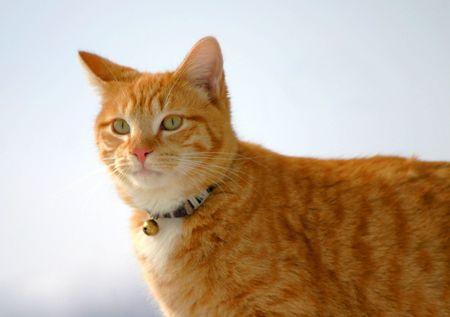 flink: Cat Stalking