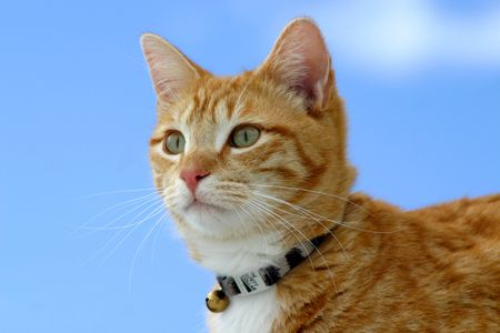 Cat Looking photo