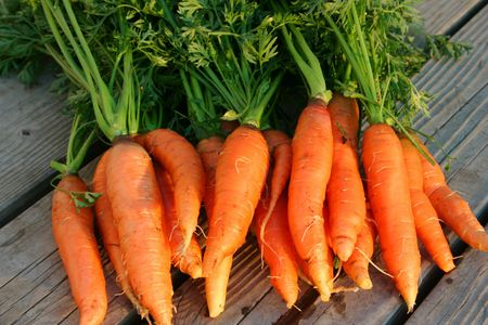 Homegrown fresh harvested carrots Stock Photo