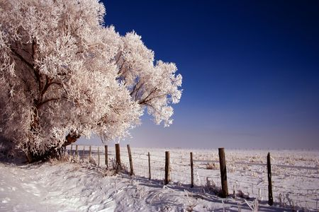 fencepost: Icy rural road in Valley County Idaho, Winter