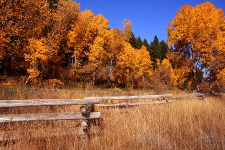 Autumn In Valley County Idaho Stock Photo - 706906