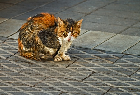 wet cat on the road Stock Photo