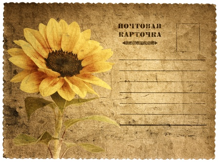 old postcard with a picture of a sunflower