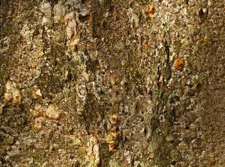 bark from a tree trunk  Stock Photo