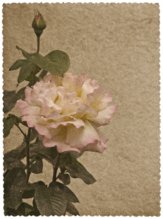 Greeting card with rose. photo