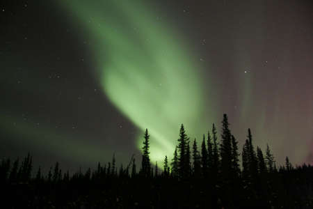 ionosphere: A nice bending aurora arc emerging from behind spruce trees Stock Photo