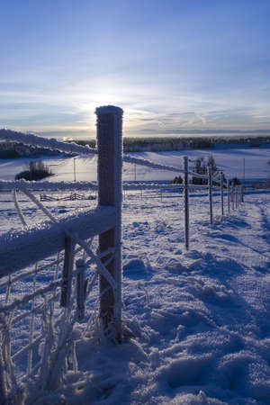 counted: FROZEN: hoared fence with counted light from the SUN