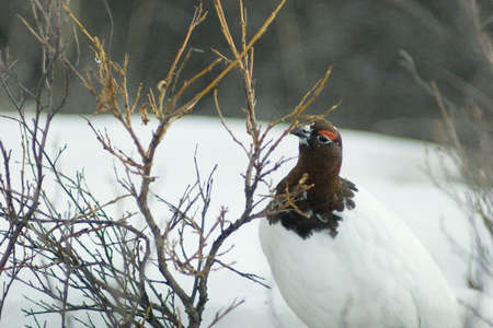 what to eat: This is what birds eat in the winter time