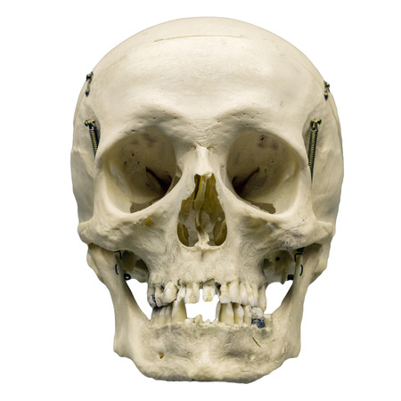 human body part: Human skull on isolated white background.